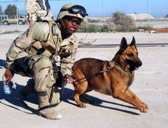 Dogs in the military