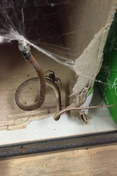 37 Pictures That Prove Australia Is The Land Of Nope Spiders In Australia, Australia Animals Scary, Weird Facts, Fun Facts, Meanwhile In Australia, Kill It With Fire, Geckos, Metal Clock, Funny Boy