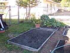 Tent pole framing for this year's frugal greenhouse