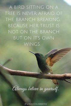 A bird sitting on a tree is never afraid of the branch breaking, because her trust is not on the branch but her own wings. Always believe in yourself. Freedom Quotes, Courage Quotes, Success Quotes, Always Believe, Believe In You, Wisdom Quotes, Quotes To Live By, Quotes Quotes, Sport Quotes