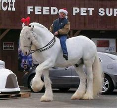 Simply Sane - Google+ - What a gorgeous Clydesdale horse