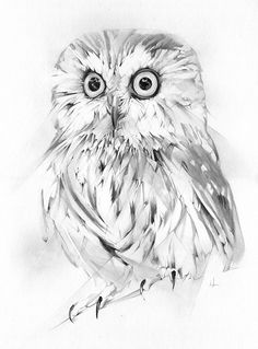 owl by alexis marcou