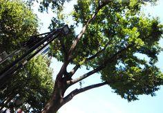 あまりにもスクスク育った街路樹は、月の灯りをさえぎるだろう。街灯はその低さゆえに成り立っている。自然と文明の交差点。(パーティ)