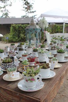 Antique teacup wedding favors with succulents.