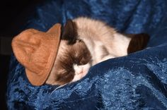 Pin for Later: Can't-Miss Moments From the MTV Movie Awards Conan called out Grumpy Cat, who was taking a snooze in Pharrell's hat.