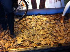 Herfst etalage