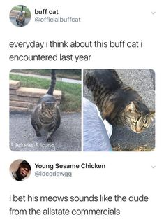My friend told me a story about his dad putting out expired muscle milk every day and stray cats would drink it. Eventually, the neighborhood had a lot of buff cats