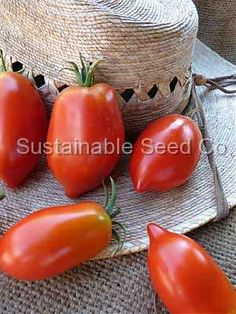 Amish Paste Tomato Seeds - Sustainable Seed Co.  I love almost anything Amish!  I'm looking forward to making my own paste/sauce.