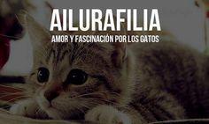 Ailurafilia :$
