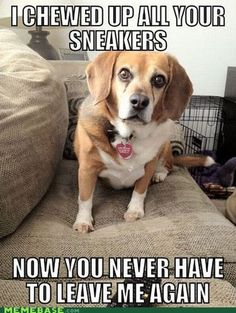 beagles! @Marti Carpenter