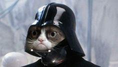 Darth angry kitty