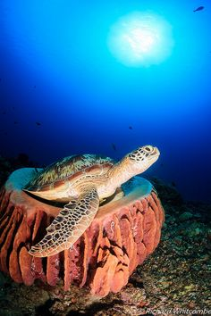 Turtle resting on a soft sponge
