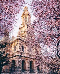 Paris est une Fête! — Spring blossom in Paris by Olivier Wong.