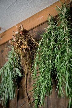 Hanging herbs to dry and how to dry herbs for the best quality