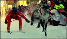Reindear racing is a very exlucive sport in the northernmost parts of Norway. Photo by Marie Knutsen All Over The World, Norway, Deer, Racing, Activities, Superhero, Drink, Sport, People