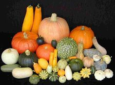 heirloom gourd seeds   Organic Heirloom Ornamental gourd / Pumpkin 30 Seeds by seedsshop