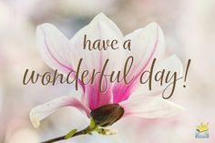 Good morning image with flowers. Wonderful Day Quotes, Good Morning Beautiful Pictures, Good Morning Images Flowers, Good Morning Picture, Morning Pictures, Good Morning Roses, Good Morning Cards, Good Morning Funny, Good Morning Greetings
