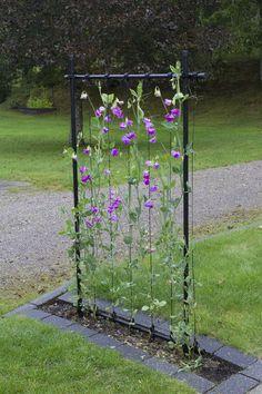 13550050010 Raised Garden Beds, Garden Projects, Trellis, Backyard Landscaping, Garden Inspiration, Vegetable Garden, Gardening Tips, Vines, Pergola