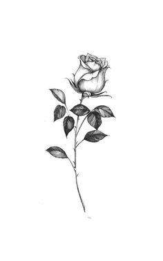 Single Rose Tattoos, Rose Tattoos For Men, Spine Tattoos For Women, Small Tattoos For Guys, Petite Tattoos, Mini Tattoos, Cute Tattoos, Body Art Tattoos, Tatoos