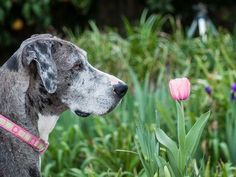 Best and Worst Flowers to Plant for a Pet-Friendly Garden | SouthernLiving