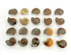 Ammonite Fossil Full Sheet -- 1-2cm Ammonite Fossil 20 pieces -- 10 pairs - 1 Sheet (RK28B9) by RockParadise on Etsy https://www.etsy.com/listing/239445813/ammonite-fossil-full-sheet-1-2cm