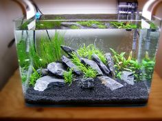 Setting Up Your Own Basic Planted Aquarium - Fishing Tank - Ideas of Fishing Tan. - Setting Up Your Own Basic Planted Aquarium – Fishing Tank – Ideas of Fishing Tank - Planted Aquarium, Aquarium Set, Saltwater Aquarium Fish, Betta Fish Tank, Aquarium Fish Tank, Freshwater Aquarium, Fish Fish, Fish Aquariums, Small Fish Tanks