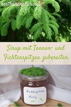 Tannen- und Fichtenspitzen-Sirup einfach zubereiten – köstlich In May, you can collect the bright green and very healthy tips of firs and spruces and process them into delicious foods, such as this syrup! Healing Herbs, Natural Healing, Spruce Tips, Atkins Diet, Food Gifts, Diy Food, Tasty Dishes, Healthy Tips, Herbalism