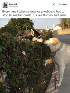This love story: | 29 Pictures To Help You Forget About The Shitshow That Is 2016