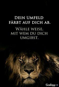 Vertraue Den Löwen Sprüche Pinterest Quotes Lion Quotes Und