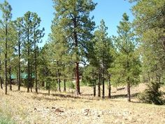 Home Site 20 | 1621 E Marbella Ct | 29,621 square feet | 0.68 acres | Offered at $129,900