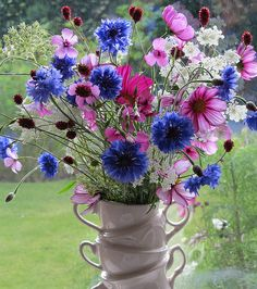 Summer garden bouquet with batchelor buttons, cosmos and queen Ann's lace! Better than any store bought bouquet😁 Spring Flower Arrangements, Beautiful Flower Arrangements, Flower Vases, Floral Arrangements, Summer Flowers, Pretty Flowers, Ikebana, Amazing Flowers, Trees To Plant