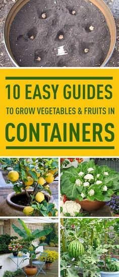 Don't have a garden? No problem. Follow these easy guides to grow various vegetables and fruits indoors. #easyvegetablegardeningideas