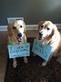 I didn't do it, she did. http://www.dogshaming.com/2013/03/i-didnt-do-it-she-did/