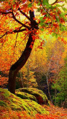 autumn, forest, trees, landscape