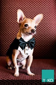 Please vote for this entry in 2013 LIFE+DOG Cover Dog Contest and Holly Madison's Lucky Pet Product Model Search!     This is my rescued chihuahua Ziggy. He is an advocate for shelter dogs everywhere and would love to win this contest, and have the money go to ACCT Philly shelter to help others like him.