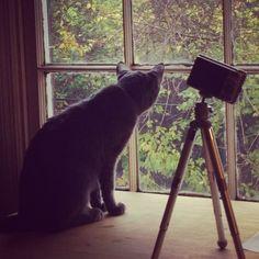 Cat Picture Window