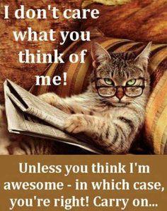 """Cat's Attitude--""""What Attitude???"""""""
