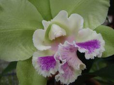 Orchid Farm Barbados