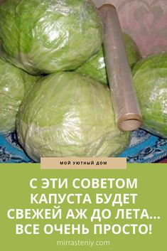 Tasty, Yummy Food, Russian Recipes, Kitchen Hacks, Bon Appetit, Preserves, Life Hacks, Cabbage, Appetizers