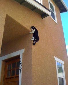 Cat Burglar!