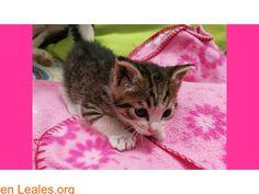 Leales.org  tu guía responsable March 21 2018 at 06:16PM   GATITO EN ADOPCION  #ACOGIDA o #ADOPCIÓN  Contacto y Info: https://leales.org/en-acogida-o-adopcion/gatos-en-adopcion/gatito-en-adopcion_i3862 #Difunde en #LealesOrg y #adopta para #AdoptaNoCompres O un #SeBusca de #perro o #gatos; #perdido o #encontrado ℹ Encontrado este gatito en Vecindario la persona que lo encontró no lo puede tener se busca urgentemente una familia para el. En todos los navegadores: Leales.org y en todas las…