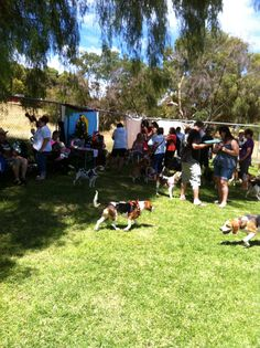 Beagle Christmas party 2013