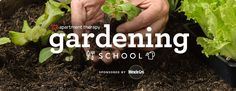 Apartment Therapy | Gardening School 101