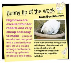 Bunny tip - week 16 Dig boxes are excellent fun for bunnies & very cheap…