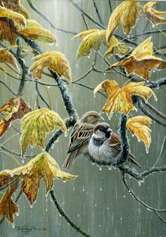 Sparrows In The Rain by Wildlife Artist Jeremy Paul