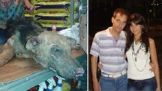 Punish couple that set stray dog on FIRE for roaming around their home! Puppy DIED in terrible pain!   YouSignAnimals.org