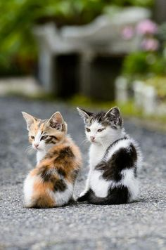Two Kittens, I would have a 100 cats if it were feasible, honestly I would have 500 kitty cats. I don't want any sweet kitties to be homeless. If I were to win the lottery I would have a kitty cat farm for all the cats in my area that are homeless. Pretty Cats, Beautiful Cats, Animals Beautiful, Beautiful Babies, Beautiful Things, Cute Kittens, Cats And Kittens, Cats Bus, Cute Baby Animals
