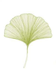 Bigbrainart - Etsy - Ginkgo Leaf Print of original Black or Green Pen and Ink Drawing