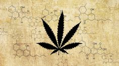 Truth in Media: Feds Say Cannabis Is Not Medicine While Holding The Patent on Cannabis as Medicine | Ben Swann Truth In Media