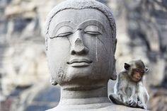 """Képtalálat a következőre: """"long tailed macaque photography"""""""